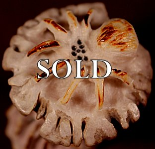 Maxx Laate  | Antler  | Tarantulas on a Mushroom  | Price: $75. +  $9.25  domestic shipping | Texas sales tax applies to Texas Residents! | CLICK  IMAGE for more views & information. | Authentic Zuni fetishes direct from Zuni Pueblo to YOU from Zunispirits.com!