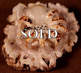 Maxx Laate |  Antler  | Tarantula  | Price: $95. +  $9.25  domestic shipping | Texas sales tax applies to Texas Residents! | CLICK  IMAGE for more views & information. | Authentic Zuni fetishes direct from Zuni Pueblo to YOU from Zunispirits.com!